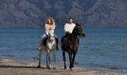 Beach Wedding with Horses